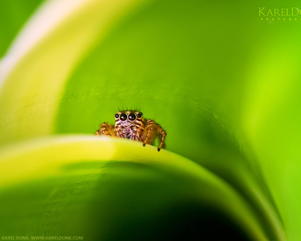 Test Macro photoshoot — Close-up of a small spider