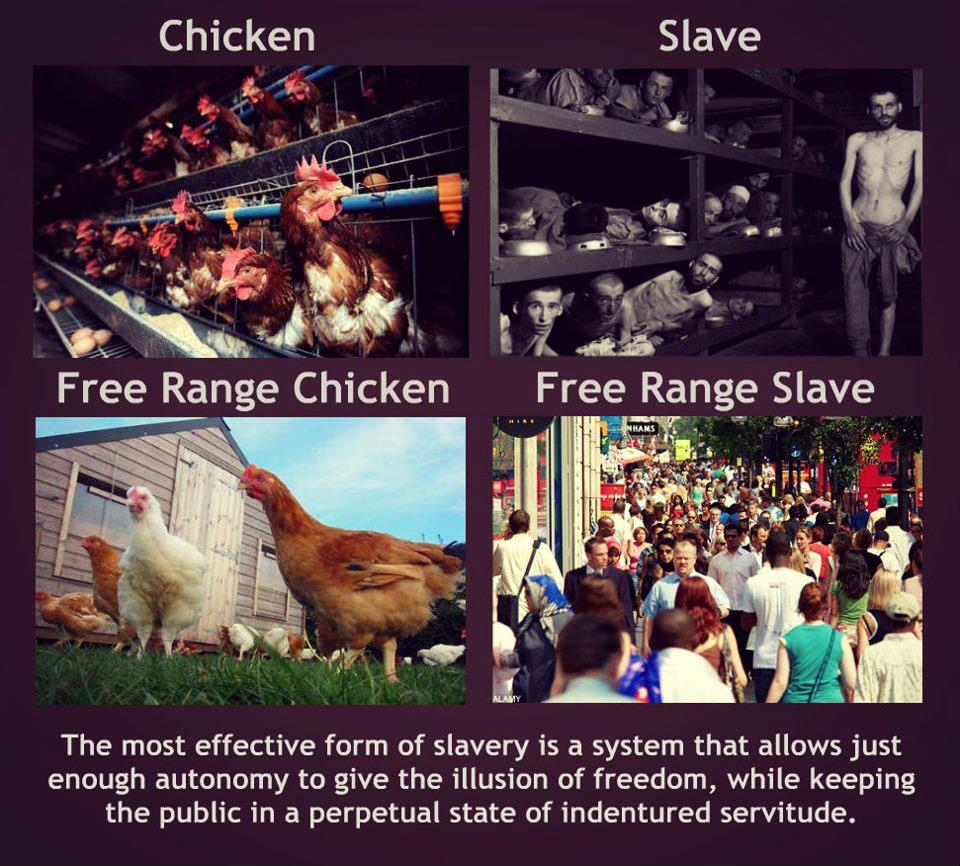 Truth About Free Range
