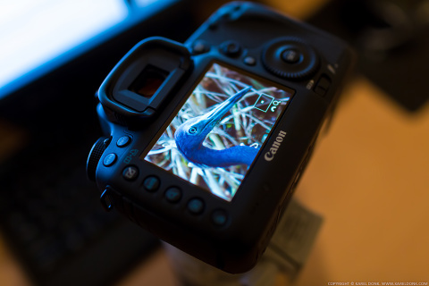 Expert Shield Screen Protector for the Canon 5D Mark III