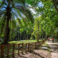 Jodensavanne Trip — Walking by the old Beth-Ahaim cemetery